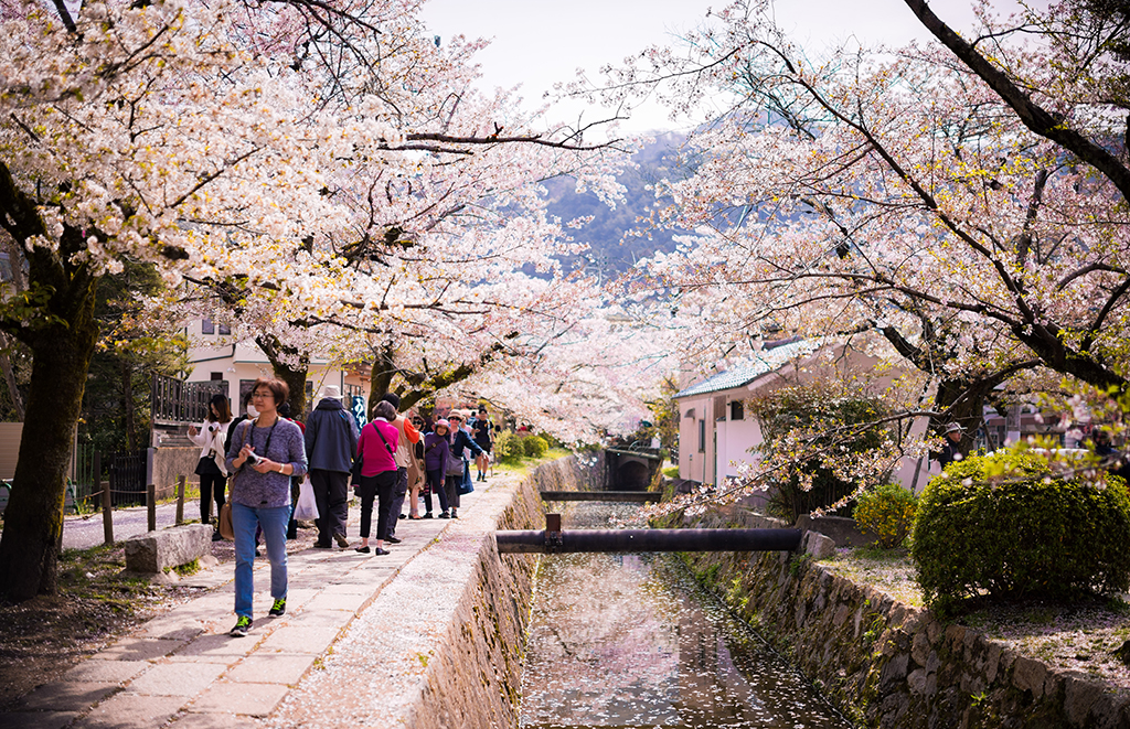 https://www.giapponeinpillole.com/blog/wp-content/uploads/2018/05/philosophers-path-cherry-blossom-sakura-season-kyoto-japan-527.jpg