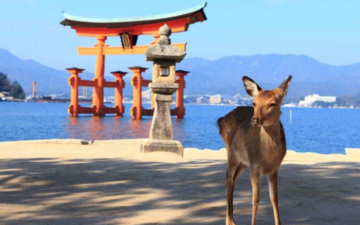 5° Giorno – KYOTO – HIROSHIMA- MIYAJIMA – KYOTO